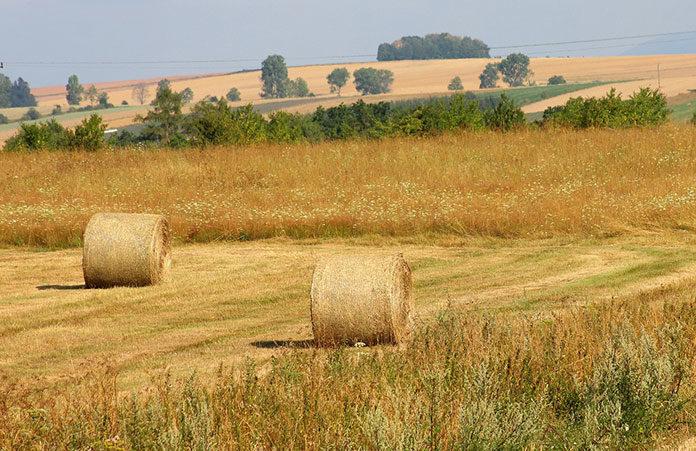 Ochrona upraw zbóż